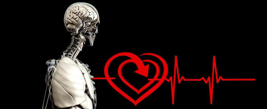 CBD wirkt auf das Herz